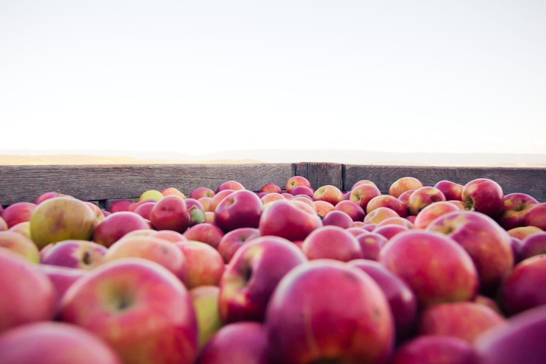 Essential Guide to Apple Season