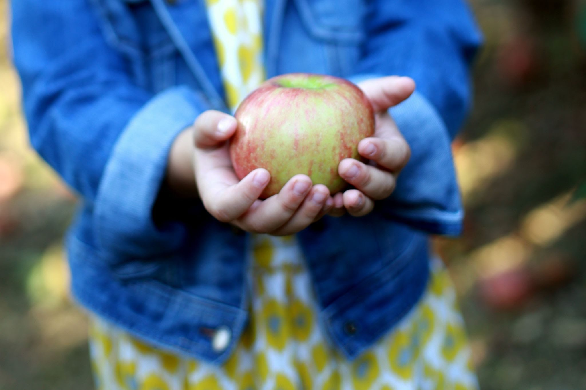 Pick-Your-Own Produce and Autumn Fun